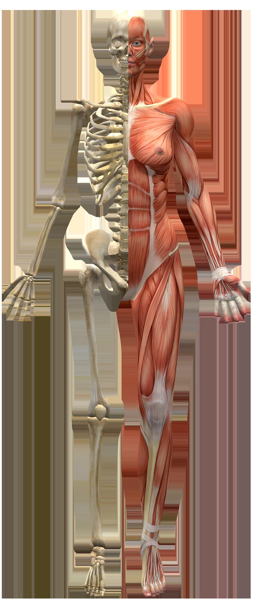 Les motifs de consultation d'un osteo à Lentilly